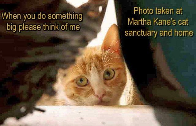 Nervous Cat