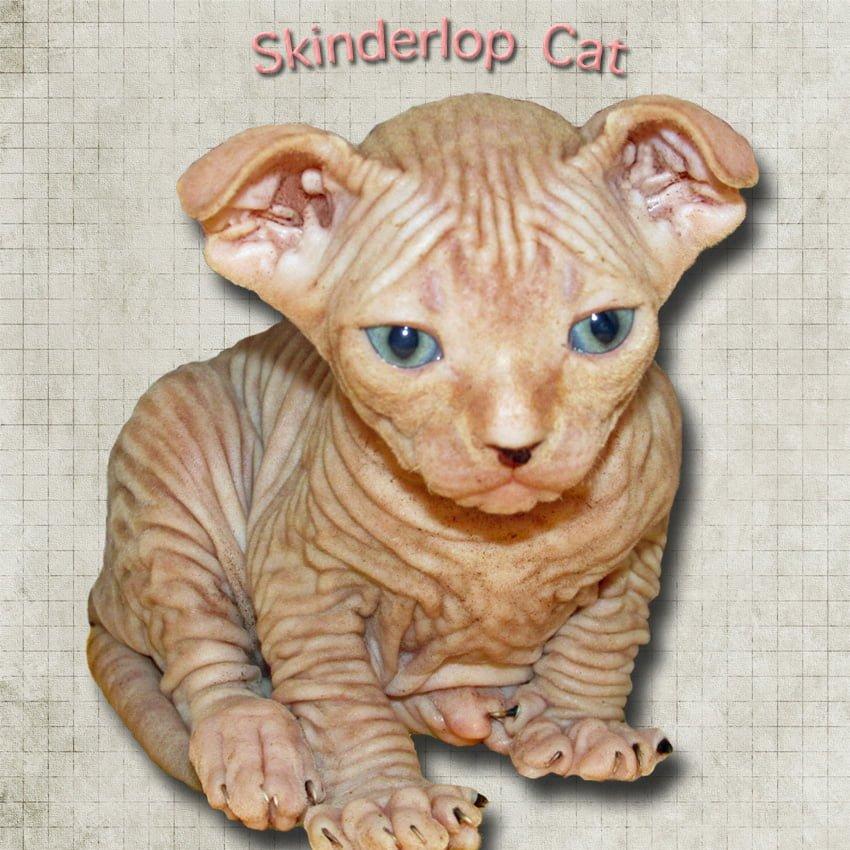Skinderlop Cat