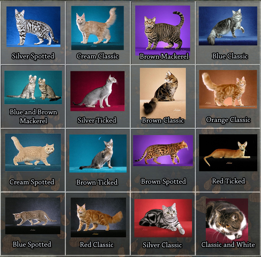 Tabby Cat Facts For Kids