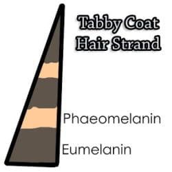 Tabby Hair Srand