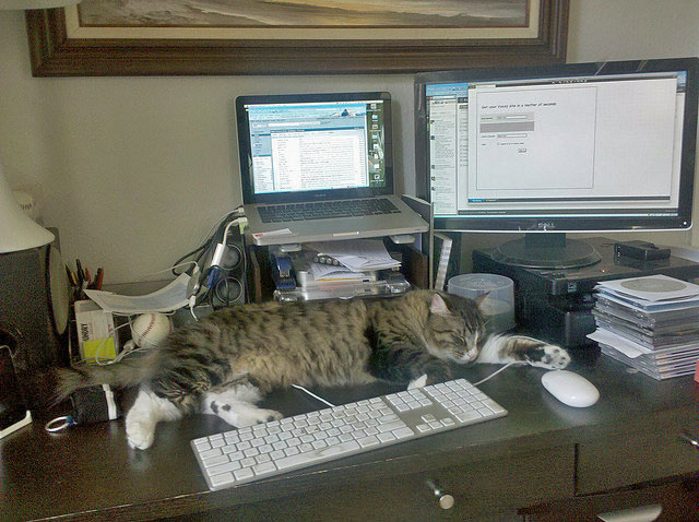 Cat at workplace home office