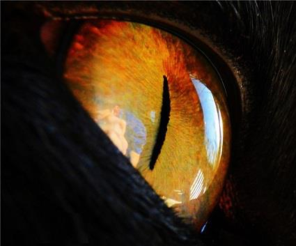 Golden cat eye