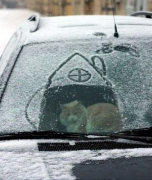 Cat in car in snow