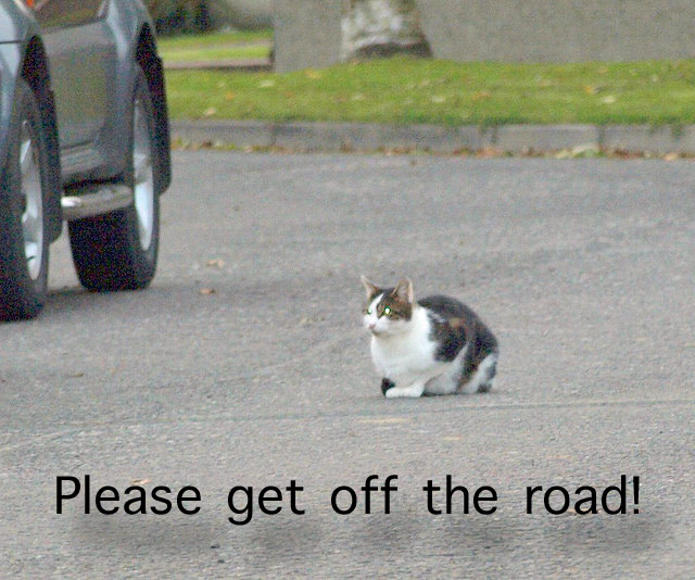 Cat sitting on the road