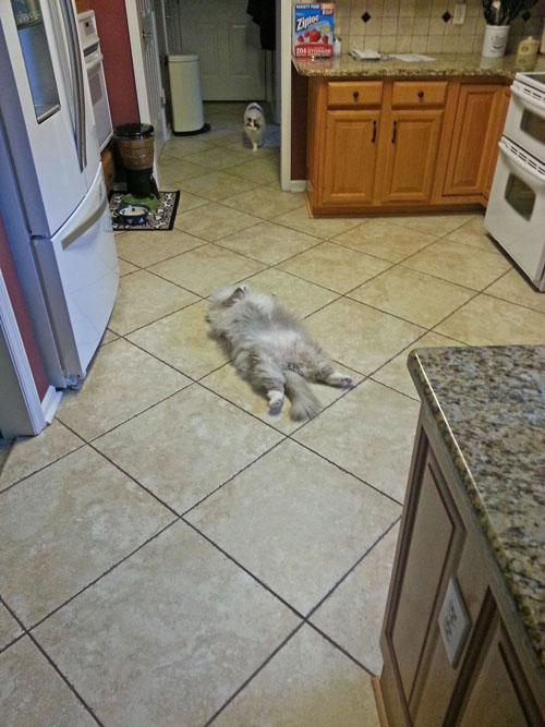 Cat sleeping on kitchen floor