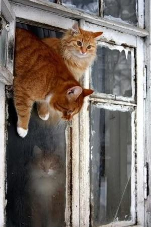Cats at an open window