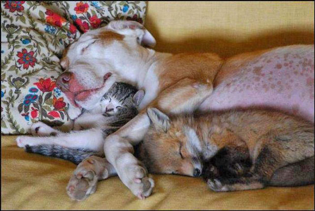 Four animals of different species snuggled up