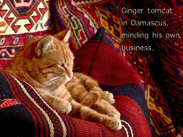 Ginger cat in Damascus