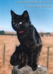 New Zealand Cat