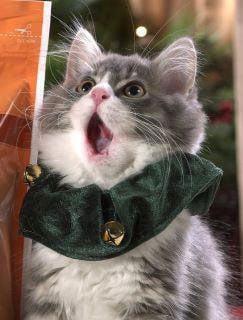 Shocked Kitten