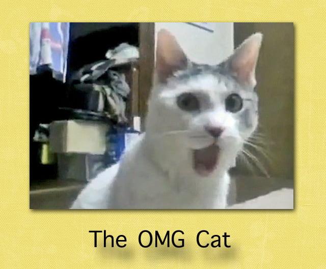 The OMG Cat