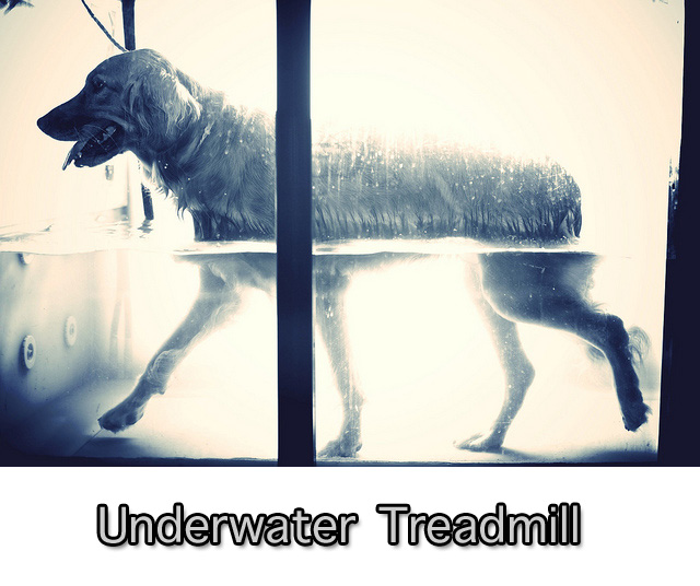 Underwater Treadmill with Dog