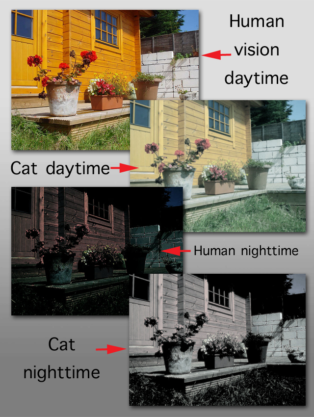 What Distance Can Cats See