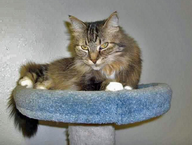 Photo of Burquitlam Lions Care Centre resident cat