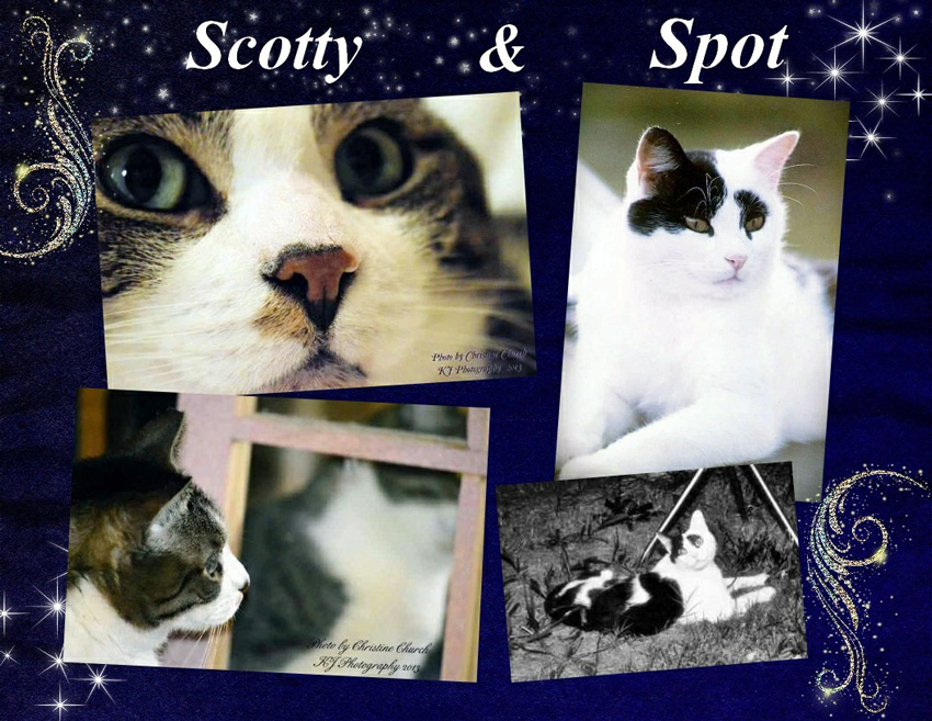Scotty and Spot