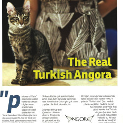 The Real Turkish Angora Part 2