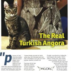 The Real Turkish Angora Part 2