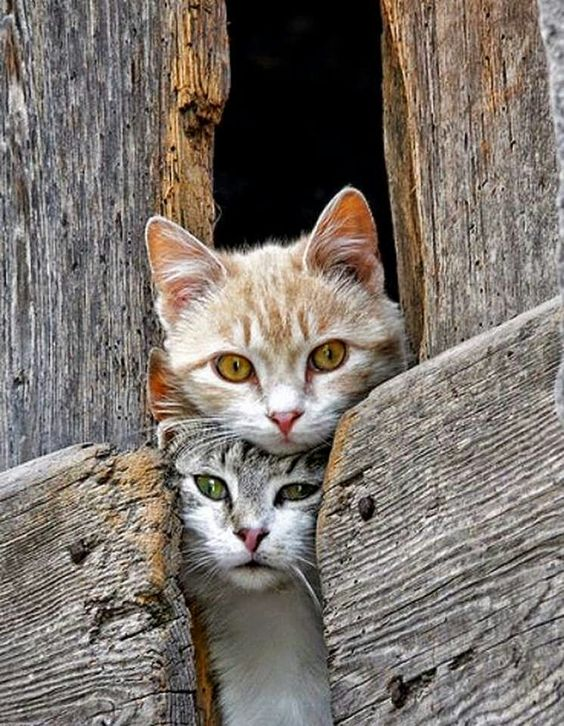 Classic barn cats