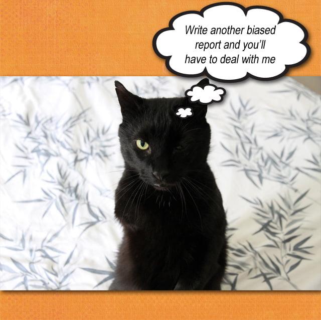 Biased report into cat predation