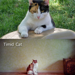 Bold and Timid Cats