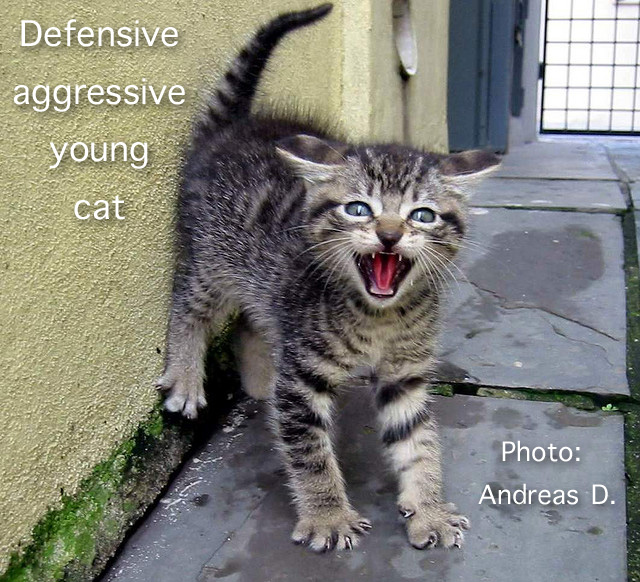 Defensive aggressive young cat
