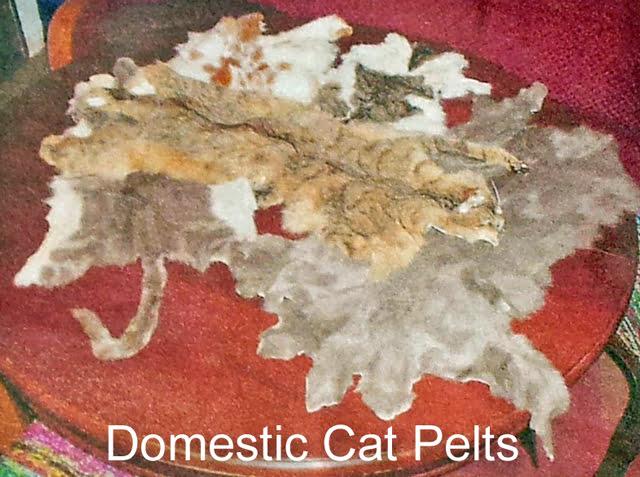 Domestic Cat Pelts