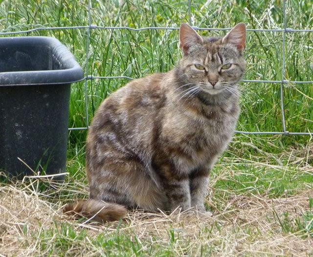 Karrot - rescue cat