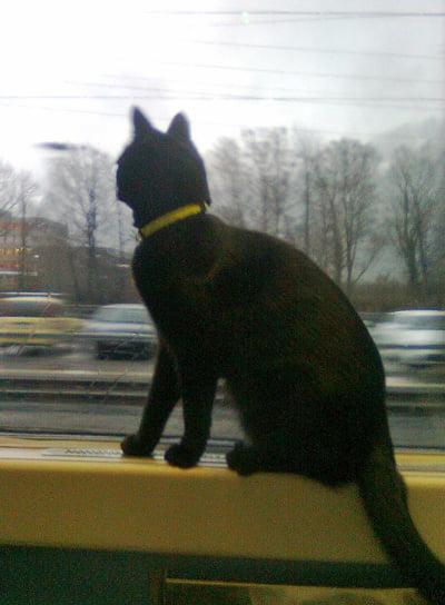 Cat on train