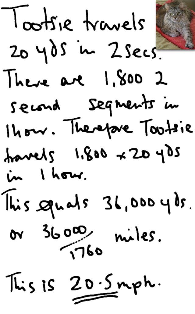 Maine coon running speed calculation