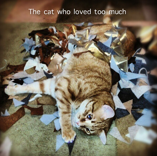 The cat who loved too much