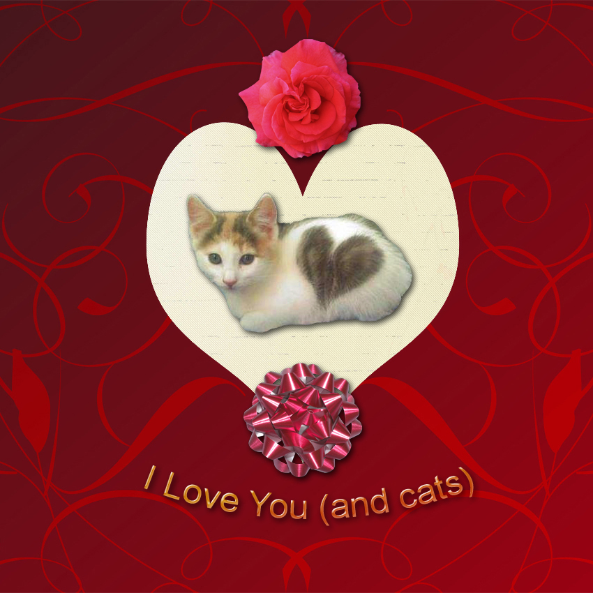 Valentine's Day Cat Card