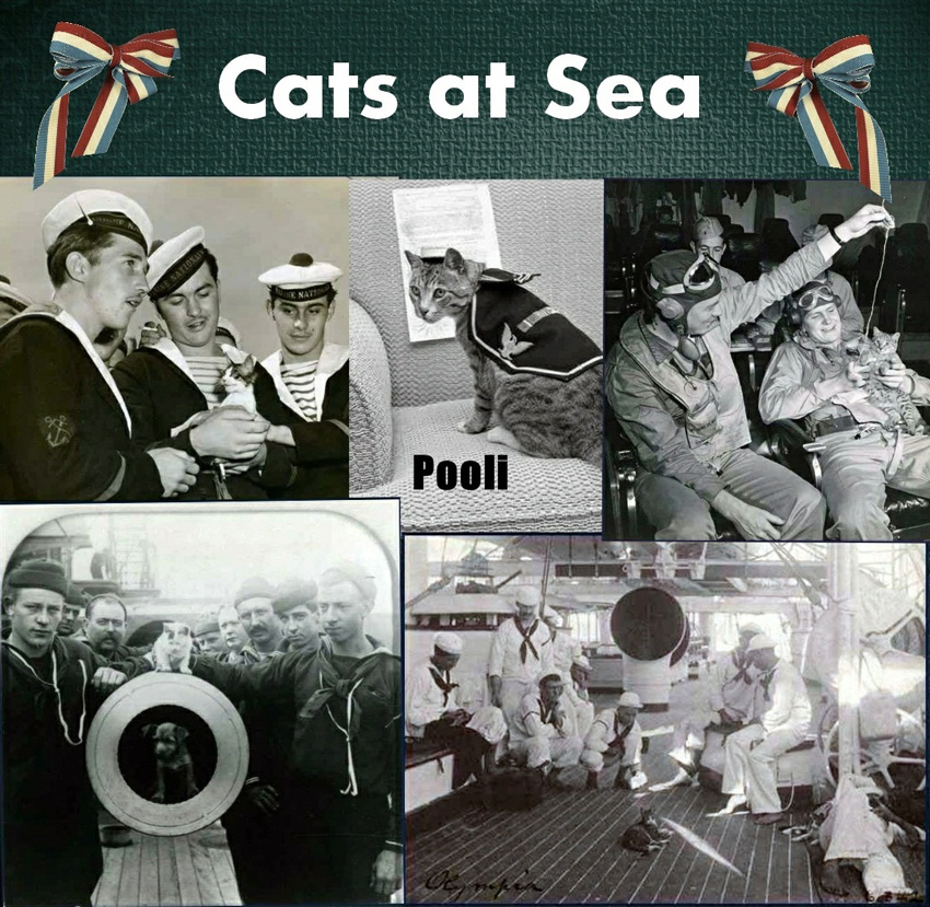 Discussion générale - Page 32 Cats-at-Sea-Collage