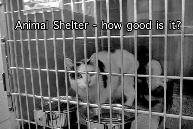 Cat in Animal Shelter