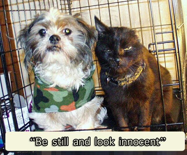 Be still and look innocent