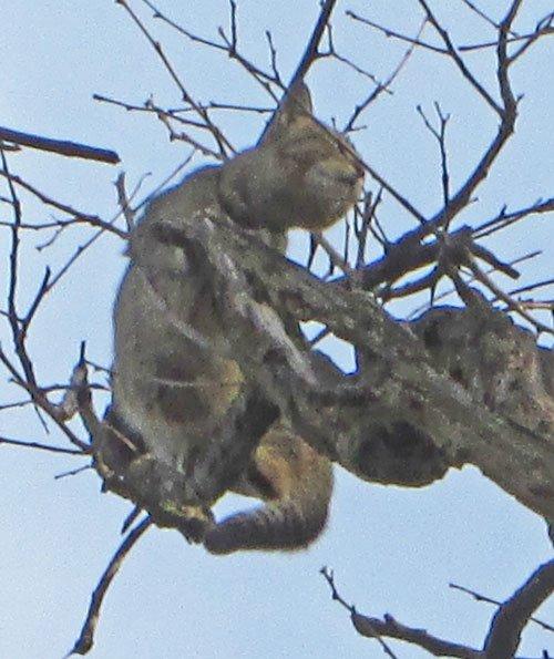 Cat attacked monkeys India