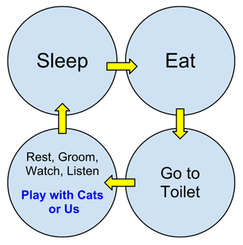 Cat behavior cycle