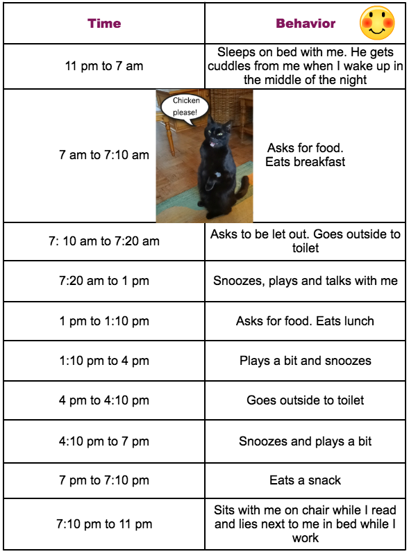 Cat behavior timeline