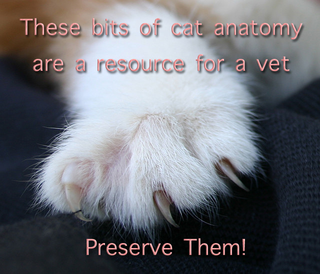 Cat claws a vets resource