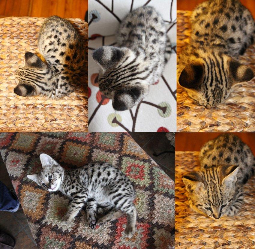 Cat coats and textures