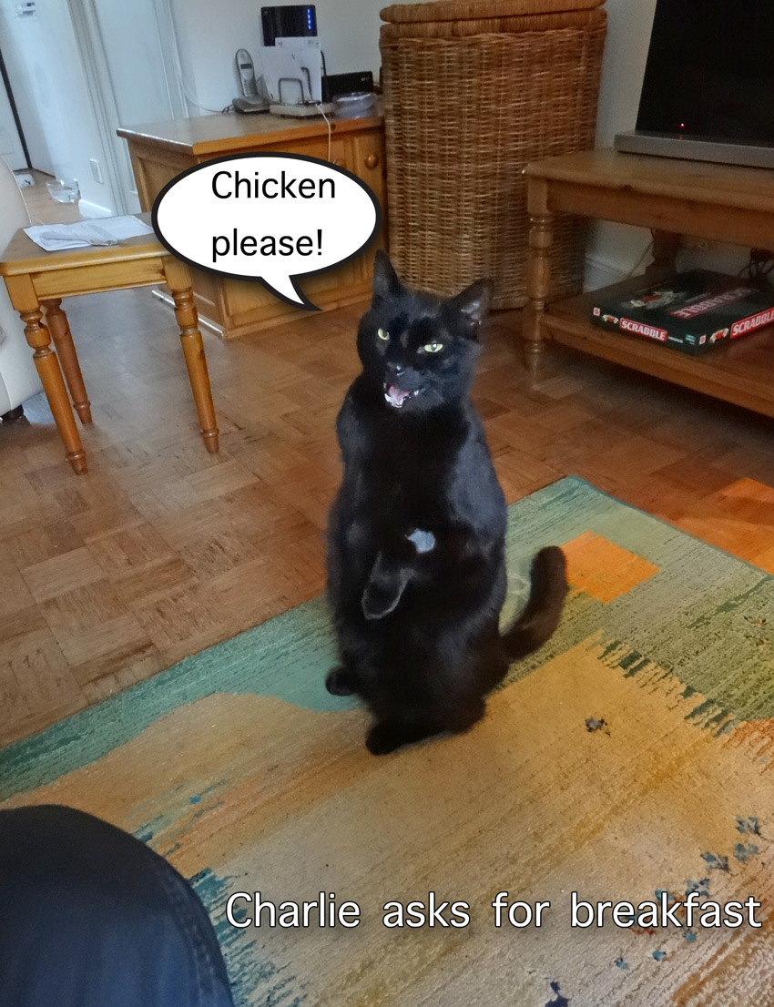 Charlie asks for breakfast