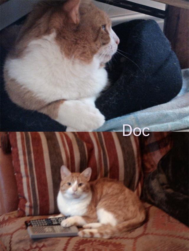 Rescue Cat Doc