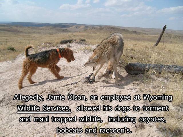 Wild Life Services animal cruelty