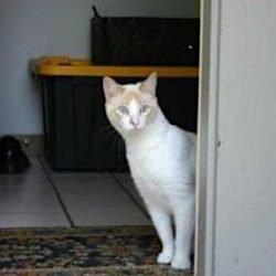 Agoraphobia in cats
