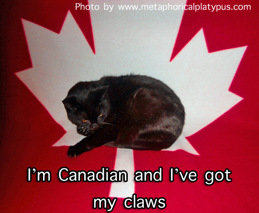 Canadian cat with claws