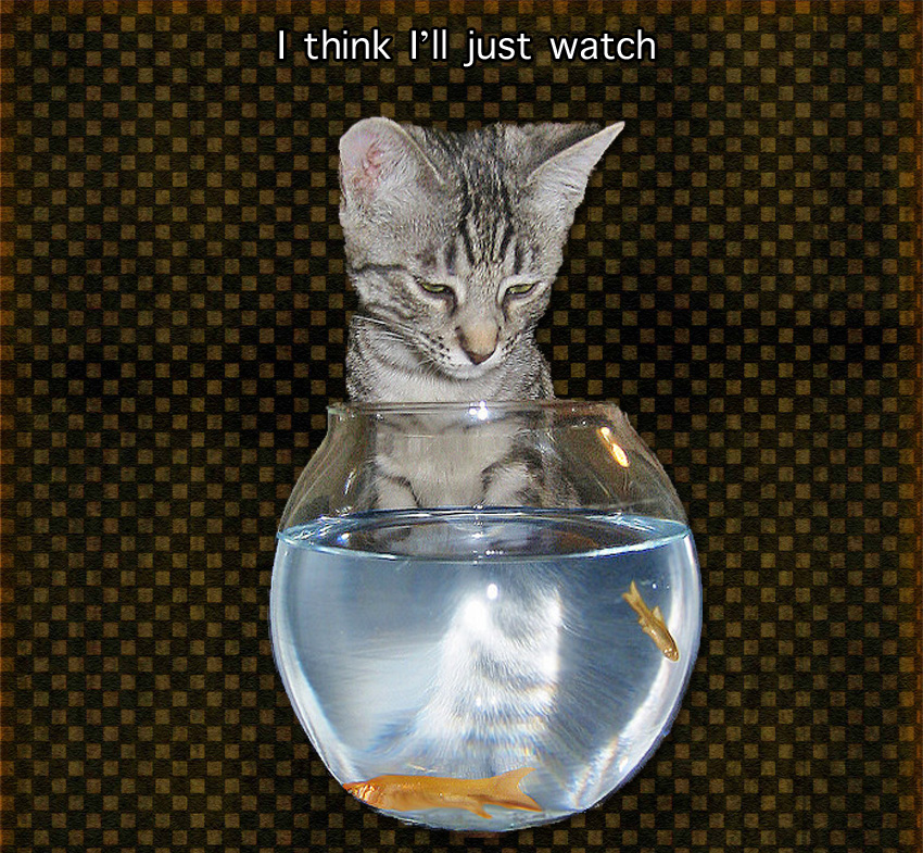 Cat and Exotic Fish