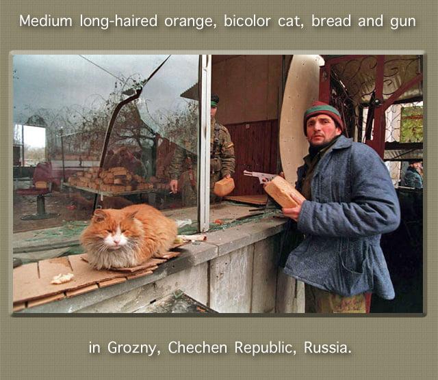 Cat bread gun chechen republic