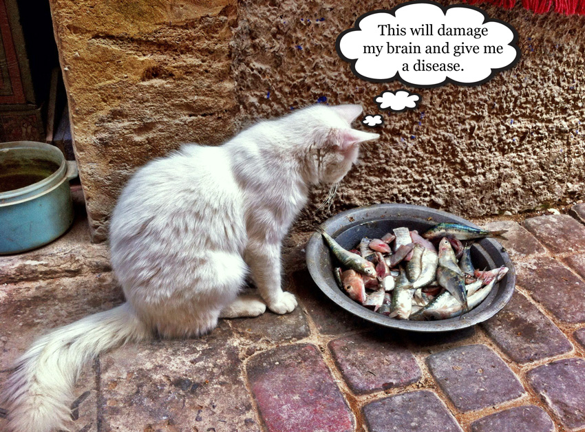Cat food Moroccan style