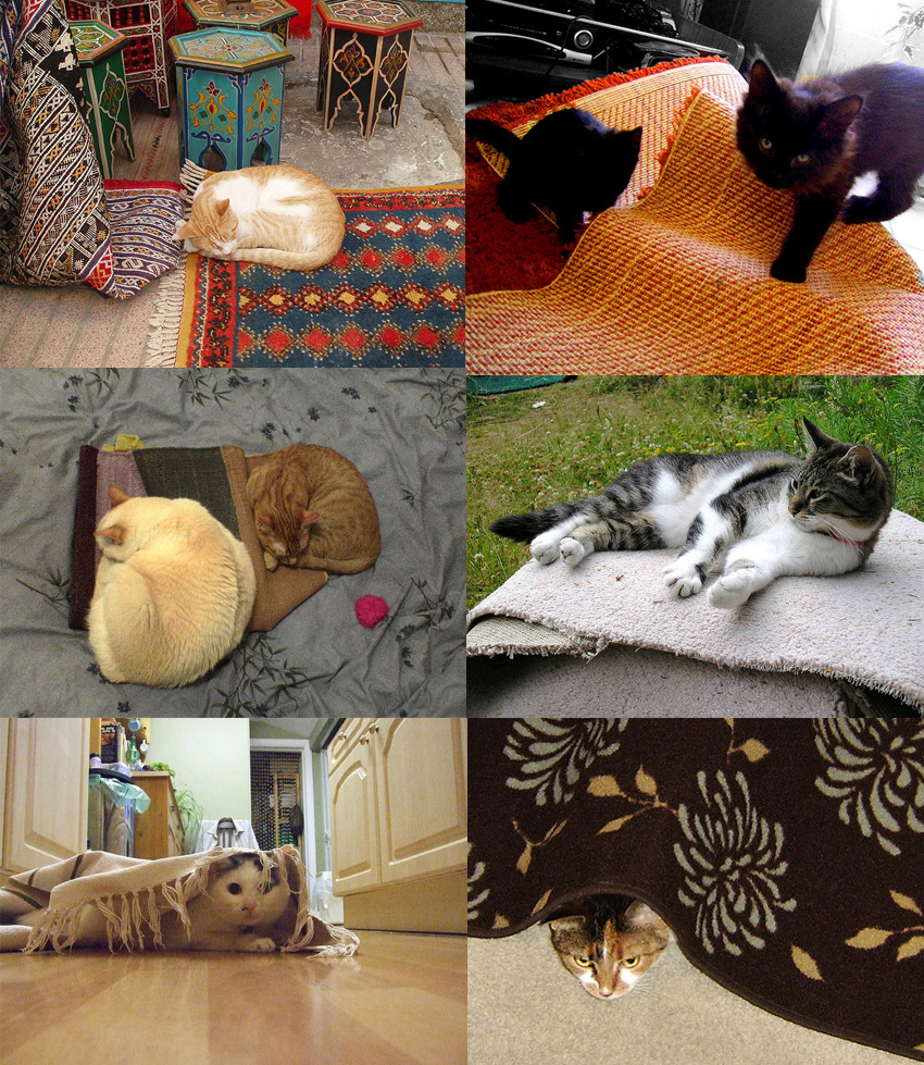 Cat and Rug Pictures
