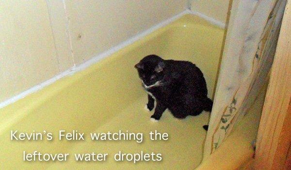 Felix watching water droplets