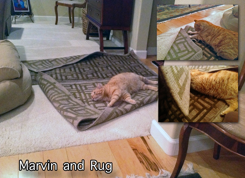 Marvin likes his rug